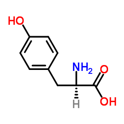 CHINA D-Tyrosine