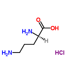 CHINA D-Ornithine Monohydrochloride